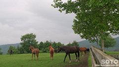 明和牧場(2)