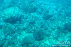 水中展望船乗船から見た海の底