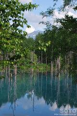 青い池(5)