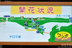 ワッカネイチャーセンター(開花情報)