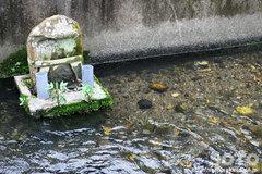 針江生水の里(3)