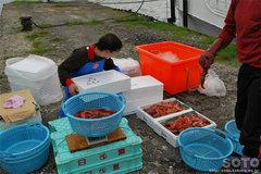 ブドウ海老漁
