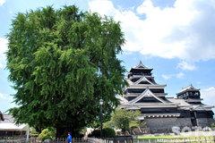 熊本城(3)