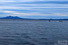 羅臼漁港見学(19)