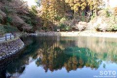 蓮の郷(池)