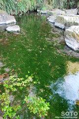 蓮の郷(水源2)
