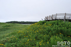 知床五湖 高架木道(2)