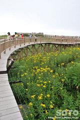 知床五湖 高架木道(1)