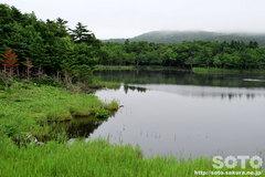 知床五湖 高架木道(一湖)