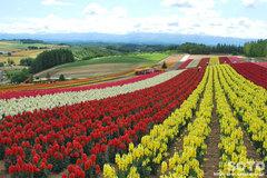 四季彩の丘(4)