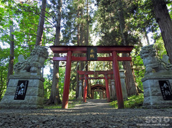 桜松公園(鳥居群)
