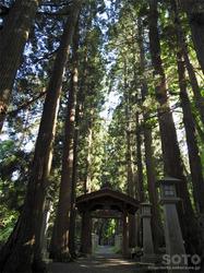 桜松公園(杉木立)