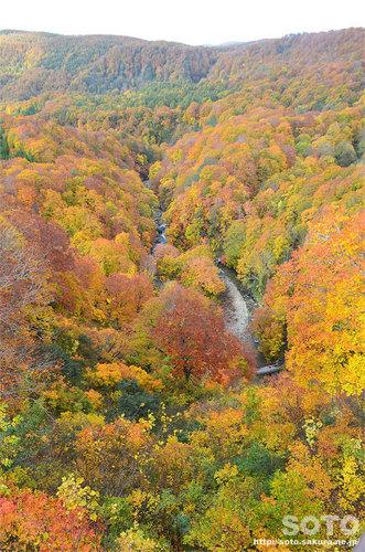 城ケ倉渓流の紅葉2015