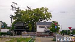 妙蓮寺(1)