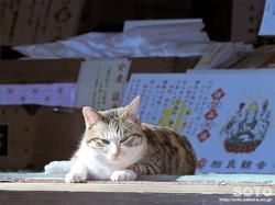 相良寺の猫