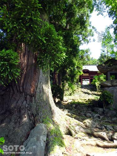永泉寺(2)