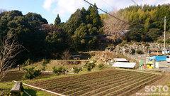 雲巌禅寺(遠景)