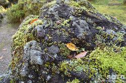 定義山(岩)