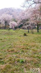 貞鱗寺(5)