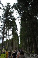 円通院(杉並木)