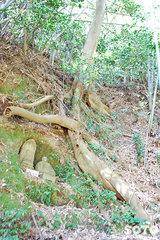 円通寺(石仏と木の根)