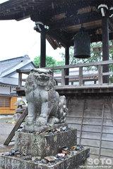 常堅寺(鐘楼と狛犬)