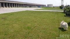 北防波堤ドーム公園