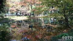 小金井公園(2)