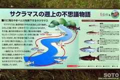 美利河ダム(5)