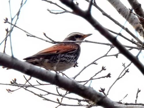 城山公園(野鳥)