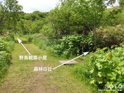 久種湖遊歩道(02)