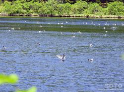 オタトマリ沼(09)