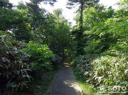歴史の森 散策路
