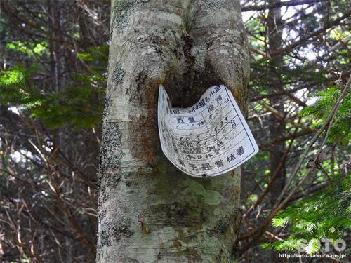 林道ドライブ(看板を飲み込む木)