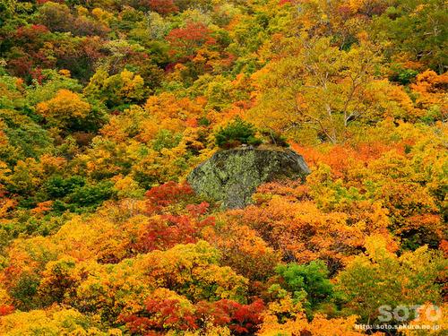 栗駒山(12)