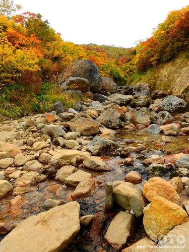 栗駒山(13)