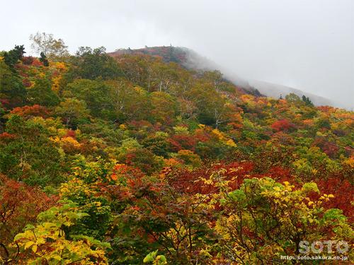栗駒山(15)