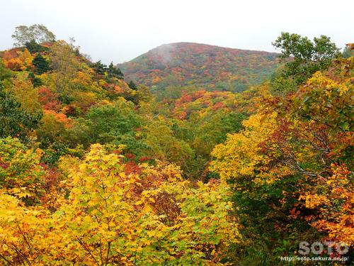 栗駒山(16)