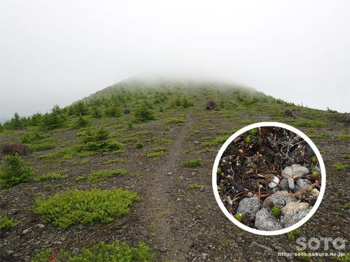 北海道駒ヶ岳(10)