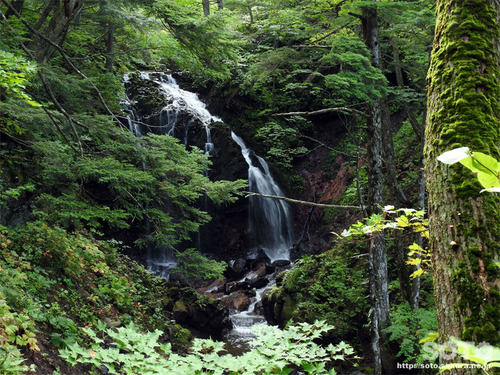 遊々の森(黒滝2)
