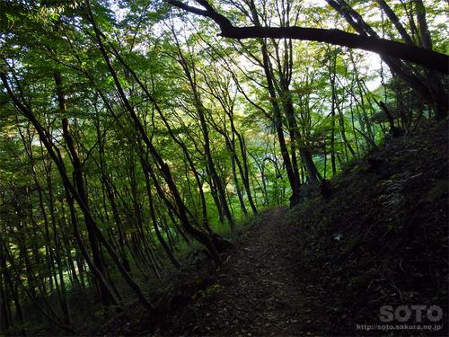 嵩山(登山道16)