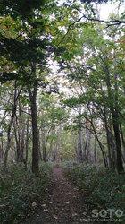 フレペの滝遊歩道(1)
