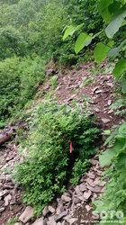 平山登山(5)