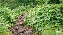 平山登山(16)