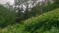 平山登山(15)
