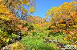 高原温泉沼(森林)