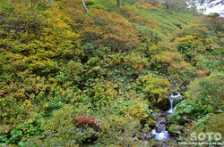 愛山渓沼の平(安足間川)