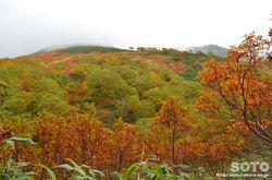愛山渓沼の平(永山岳登山道の紅葉)