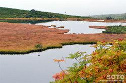 愛山渓沼の平(沼と野鳥)