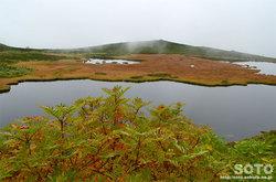愛山渓沼の平(沼とナナカマド)